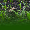 Plant Production and Protection (Crop Production)